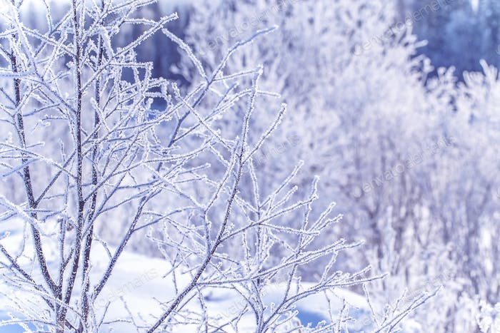 frozen winter tree branches