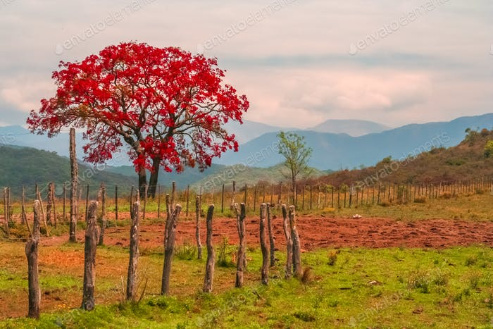 Red tree and autumn landscape