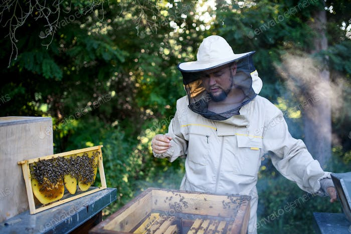 Portrait of man beekeeper working in apiary