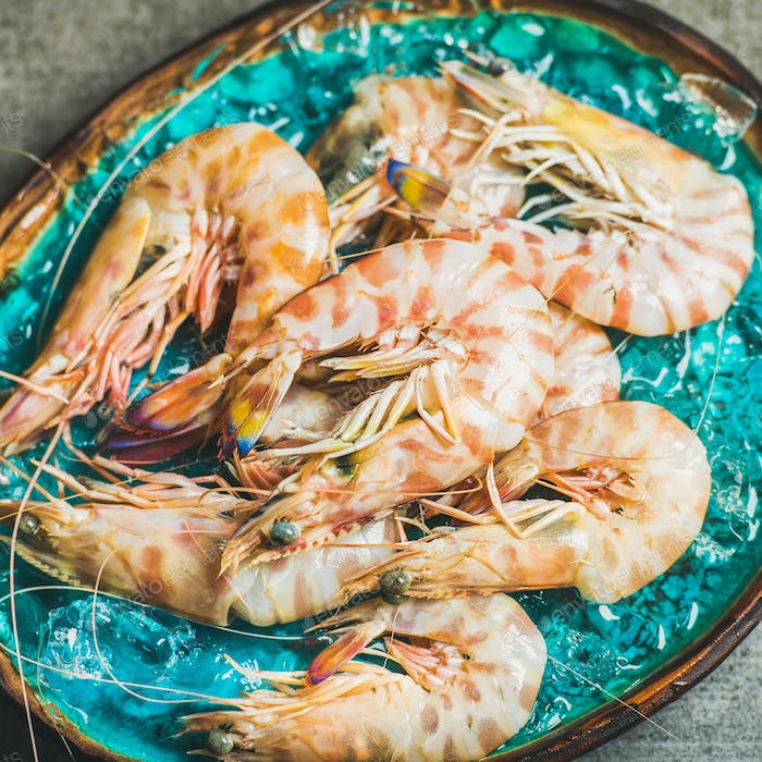 Raw uncooked tiger prawns on chipped ice, fresh seafood