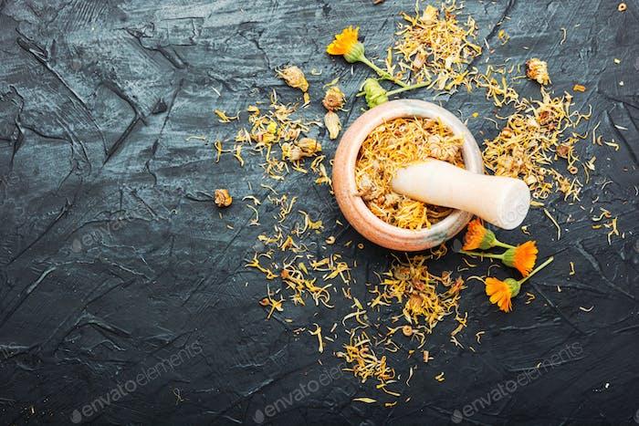 Calendula für die Kräutermedizin.