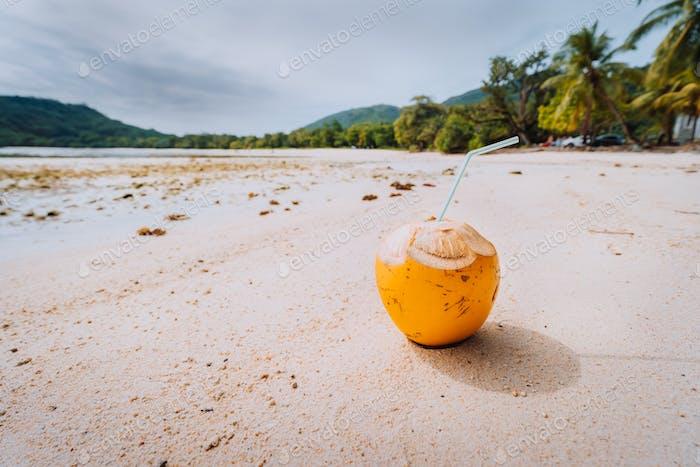 Coconut at sandy sunny beach on Mahe Island, Seychelles