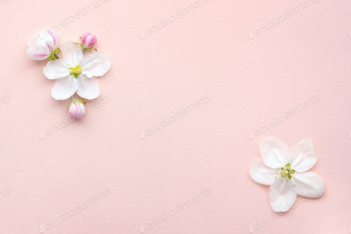 Apple blossom on a pink background with empty space for text