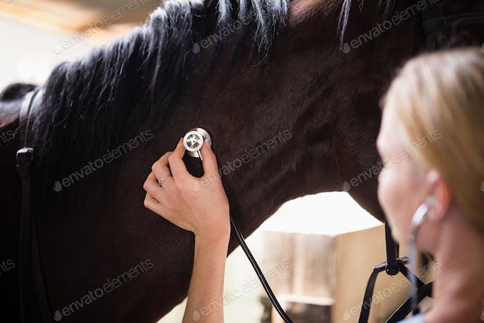 Close up of female vet checking horse