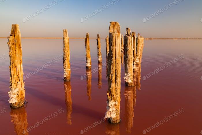 Salt on a pink salt lake at sunset. Pink Salt Lake Syvash, Ukraine