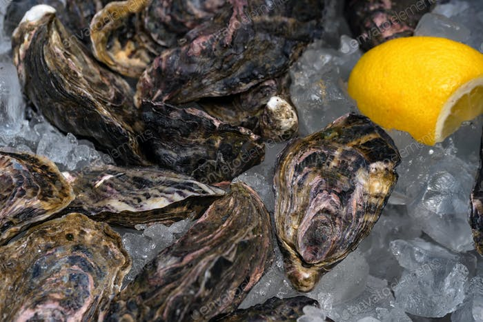 Fresh oysters on ice with slices of lemon