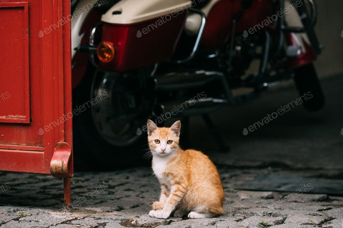 Funny Red Cute Homeless Cat Kitten Sitting Outdoor In Street