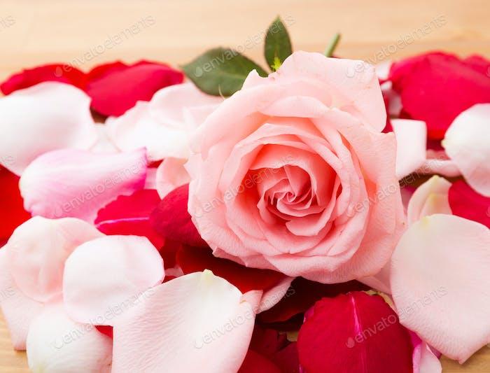 Rose and petal