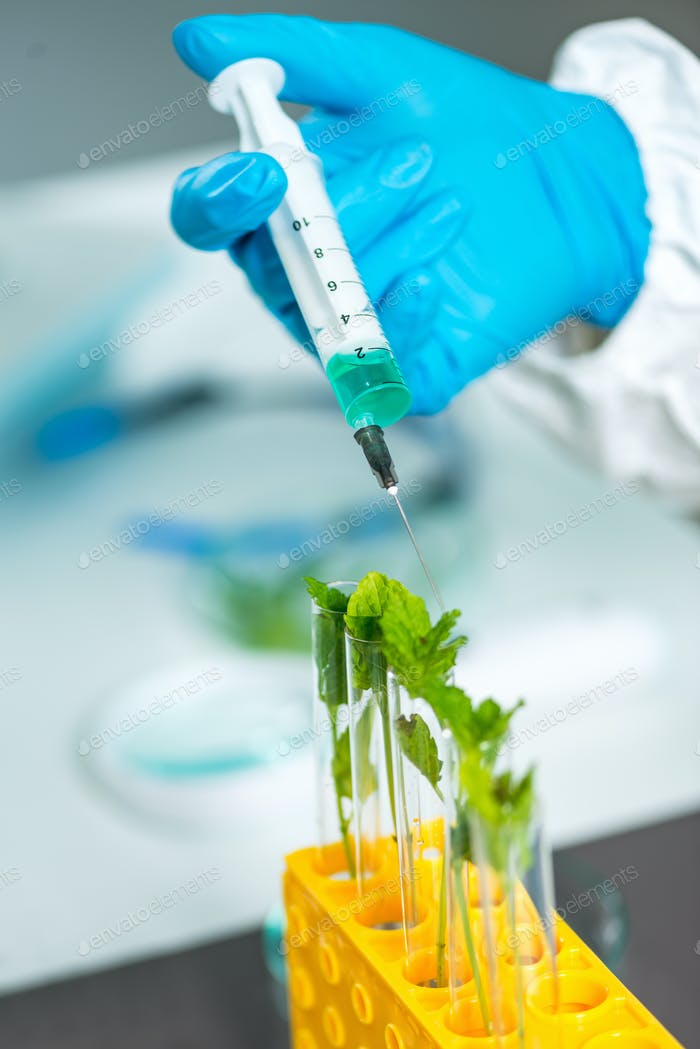 Biologe Untersuchung Pflanze Sämling