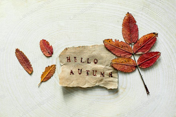 Torn paper tag with the words Hello Autumn on natural wooden background. Colorful autumn fall leaf