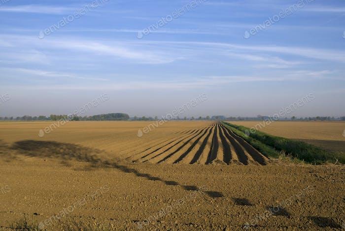 Kahles Feld mit Baumschatten