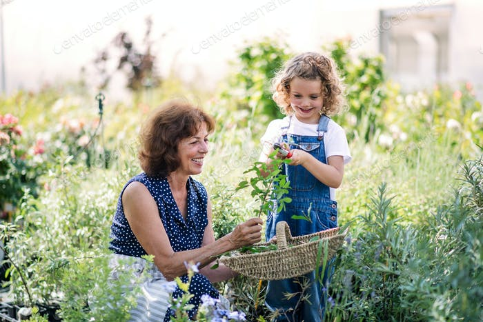 Small girl with senior grandmother gardening in the backyard garden