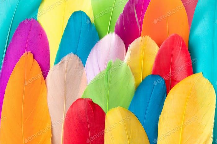 Buntes Muster aus Federn. Minimal Boho Stil Farbkonzept. Flacher Rückengrund.