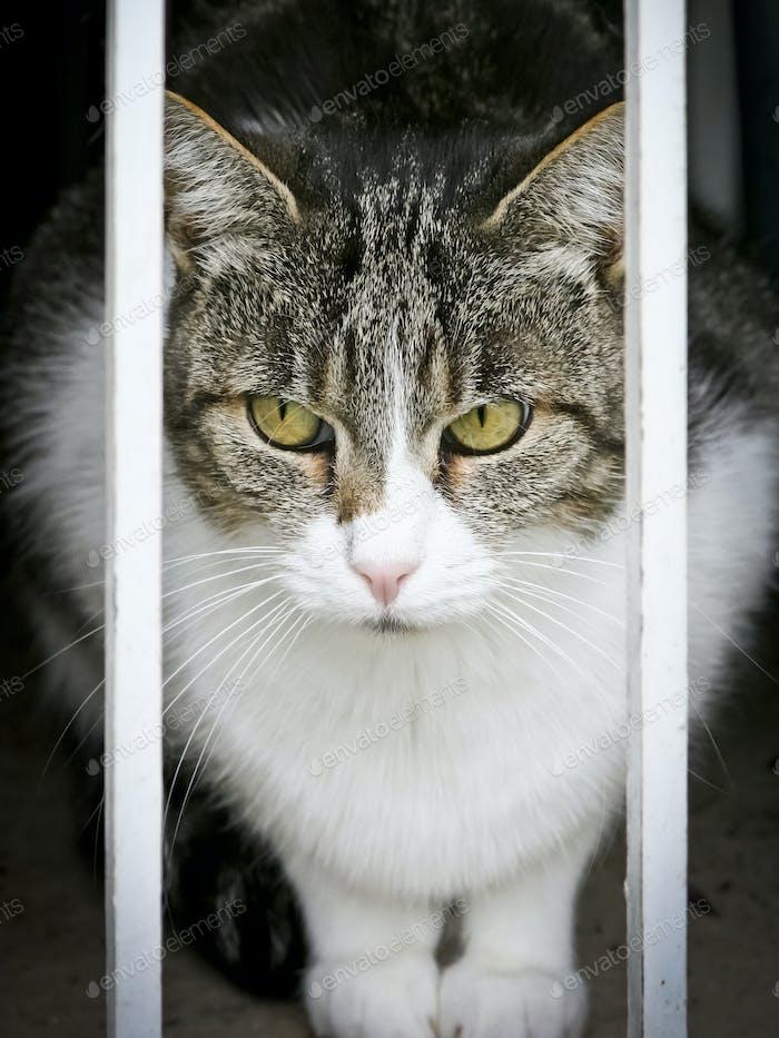 observación de gatos