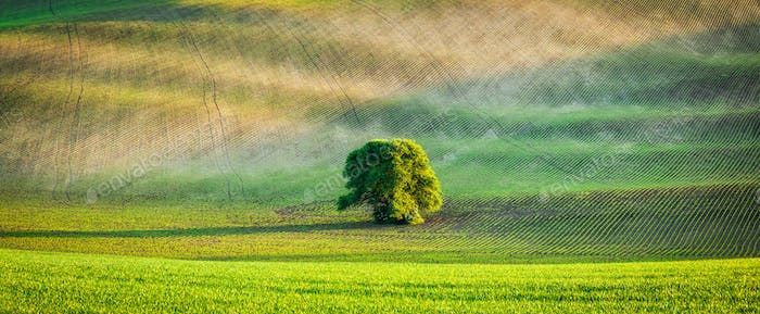 Panorama of lonely tree in ploughed field