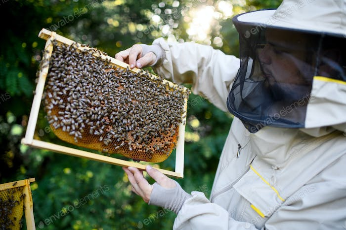 Portrait of man beekeeper holding honeycomb frame full of bees in apiary
