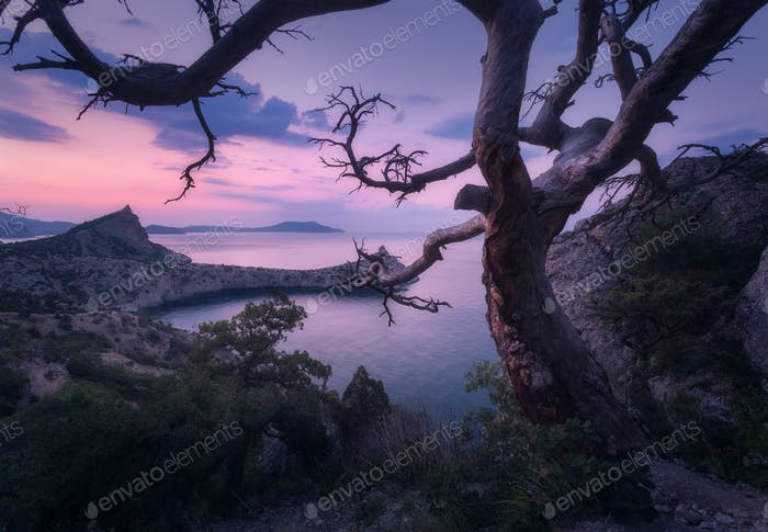 Beautiful old tree in crimean mountains at sunrise. Colorful lan