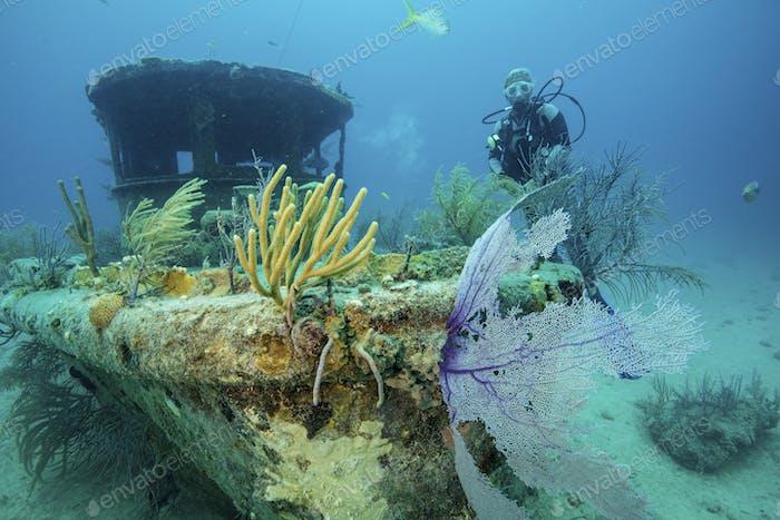 Taucher erforscht das Schiffswrack von Papa Doc. Einmal ein Garnelenboot, das Boot versenkt während eines Sturms, während