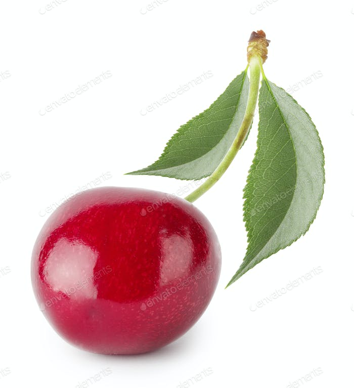 Bright ripe cherry with leaves
