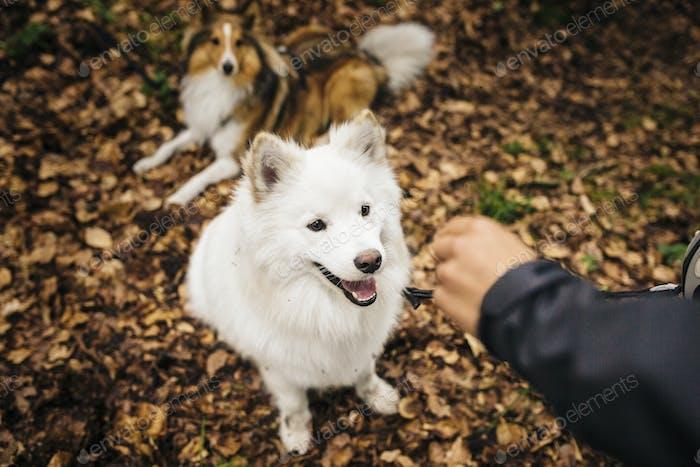 Human hand extending towards dog