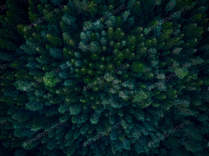 Top down aerial view over dense forest trees