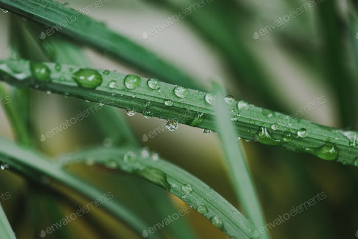 Grass close-up in a field on nature. Colorful artistic image, free copy space