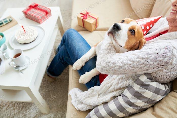 Glücklicher Hund mit Senior Owner