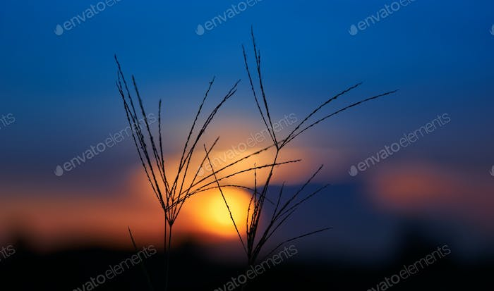 Colorful sky of sunset with grass