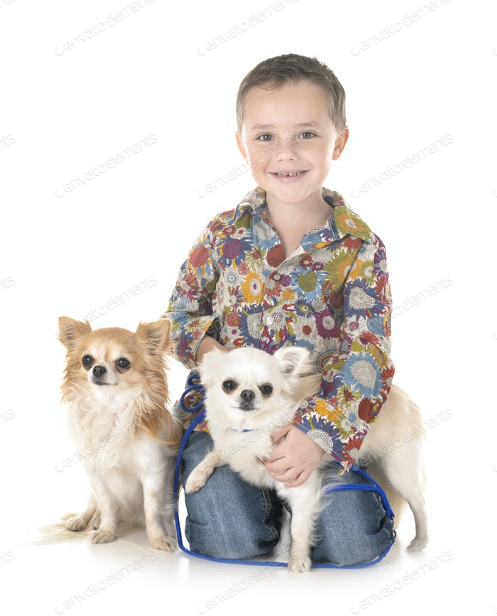 chihuahuas and child