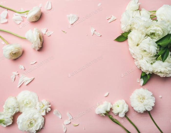 Flat-lay of white ranunculus flowers light pink background