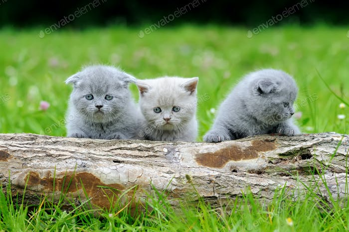 Three gray kitten on tree