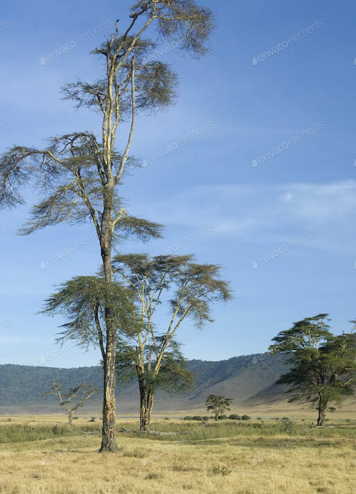 View of the view Ngorongoro Crater, tanzania
