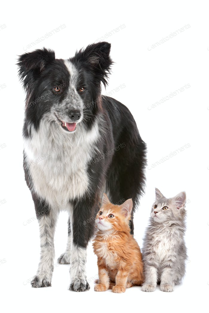Thumbnail for dog and kittens
