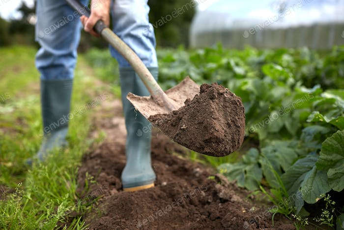 man with shovel digging garden bed or farm