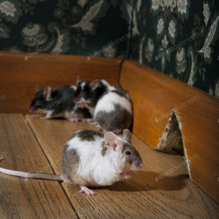 Gruppe von Mäusen zu Fuß in einem luxuriösen altmodischen Zimmer