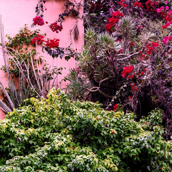 Tropical flowers. Tropical green. Urban location. Pink wall. Pla
