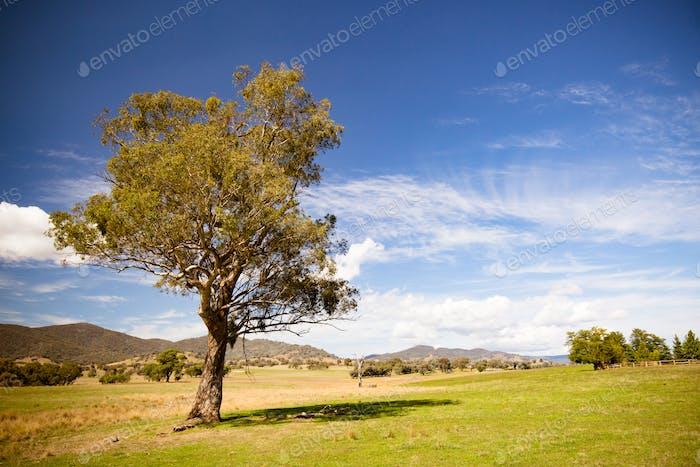Allans Flat Landscape Australia