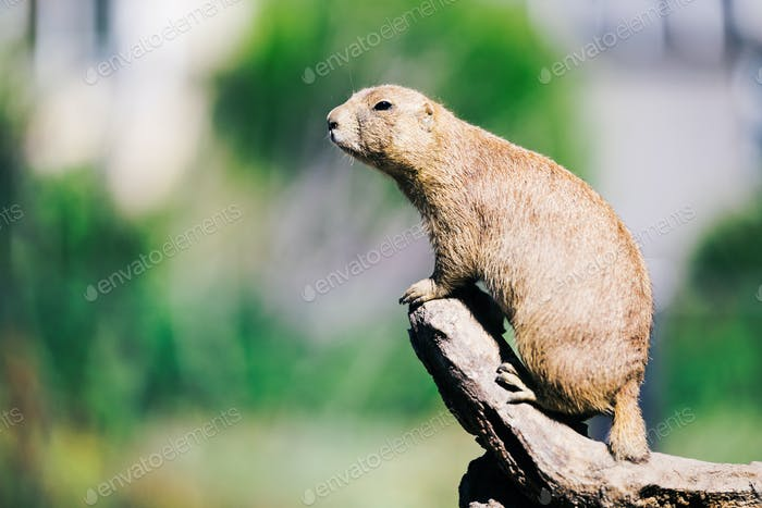 Portrait of little marmot standing on tree in nature