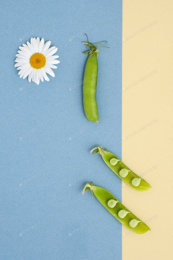 Fresh green peas and a daisy flower on a textured yellow-blue ba