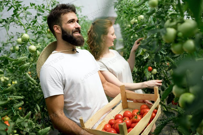 Young couple farming vegetables