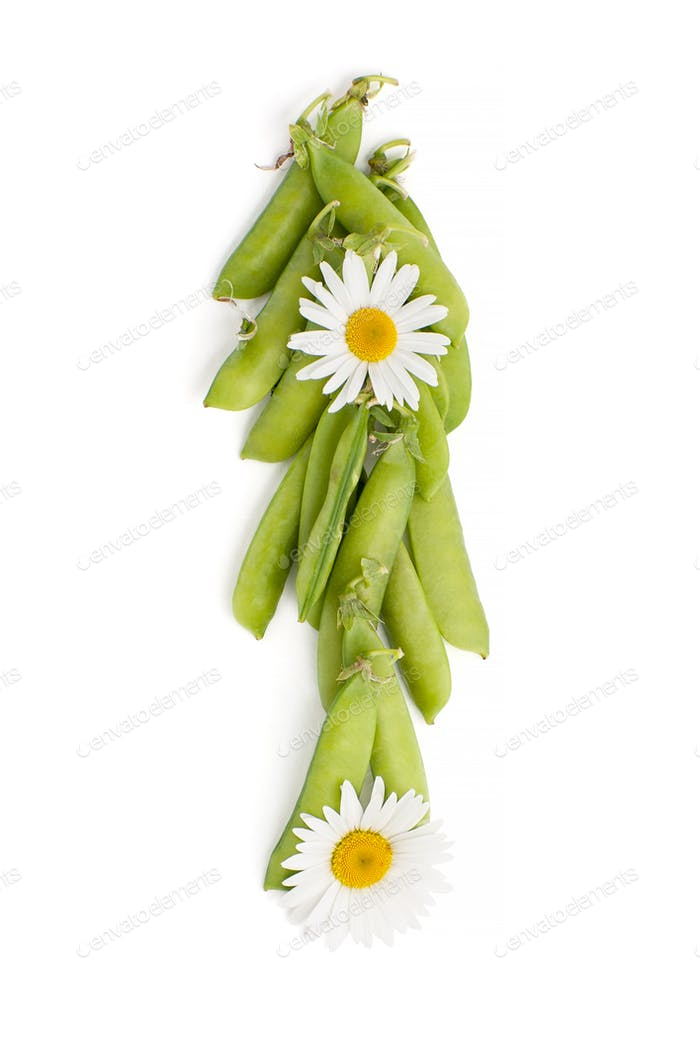 Fresh green peaked pea, decorated with chamomile flowers on a wh