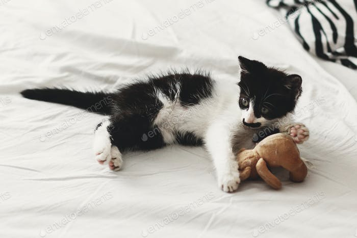 cute little kitty playing with little teddy bear toy on white bed sheets