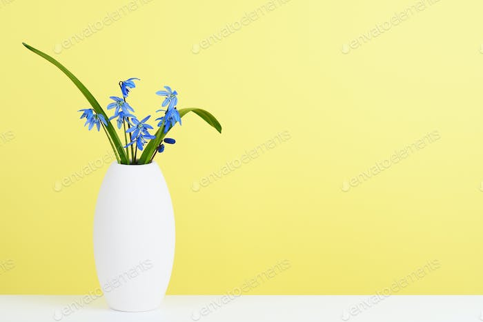 Blue scilla flowers in vase on shelf near wall