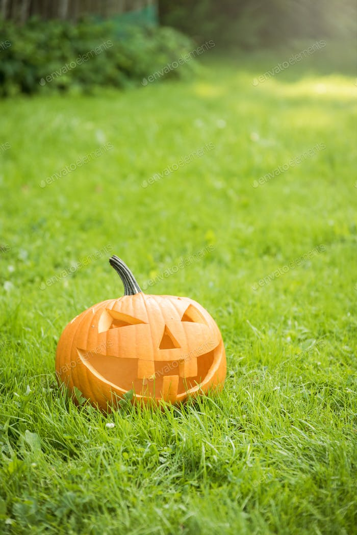 Halloween pumpkin on grass in garden