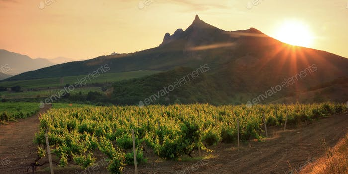Vineyards inFrance on sunset