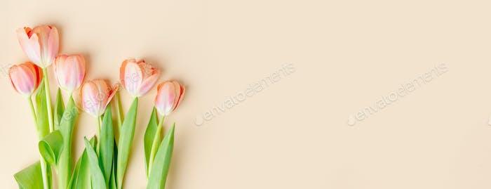 Frühlingshintergrund mit Tulpen auf Pastell