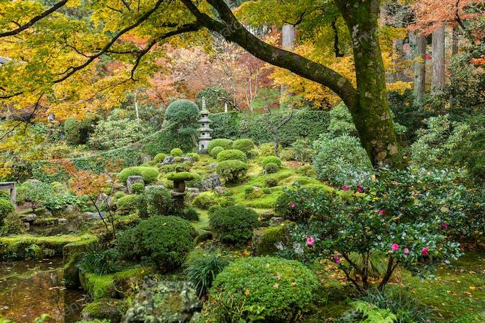 Красивый японский сад в осенний сезон