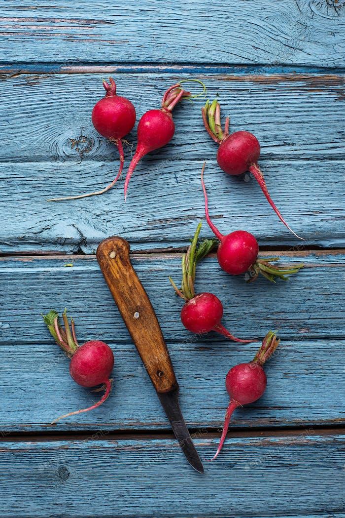 Fresh ripe radishes on blue table