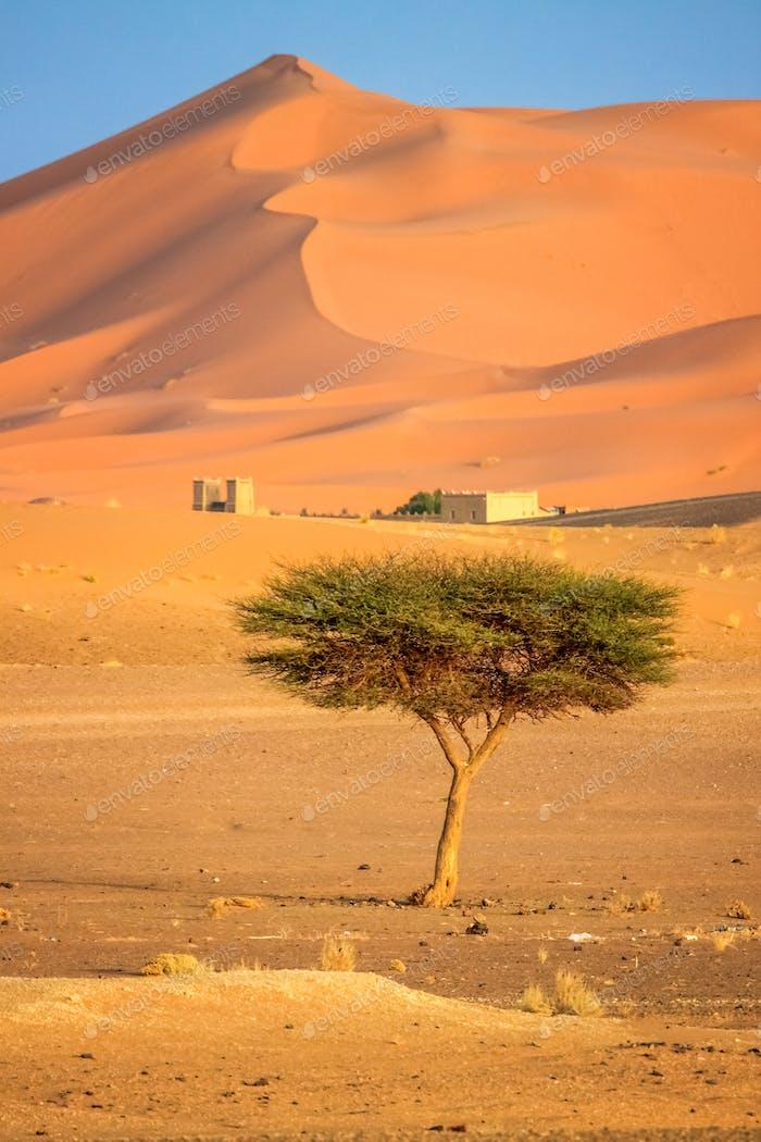 Einsamer Baum auf einer Wüste