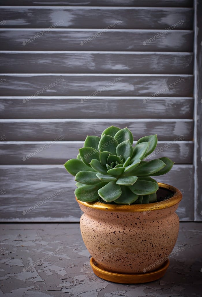 Succulent in pot on the windowsill